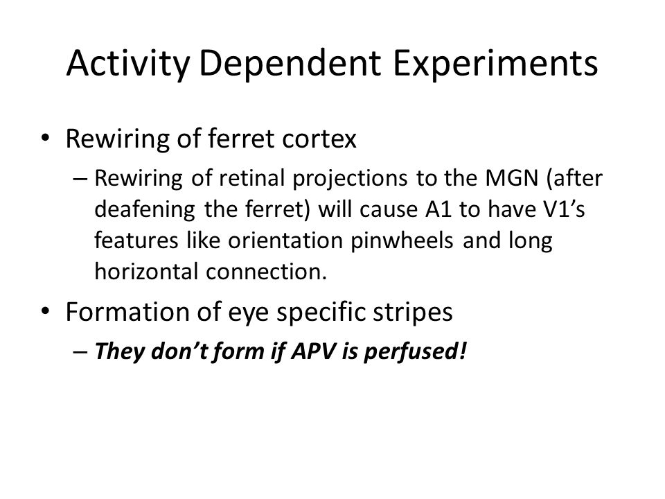 Activity Dependent Experiments Rewiring of ferret cortex – Rewiring of retinal projections to the MGN (after deafening the ferret) will cause A1 to ha