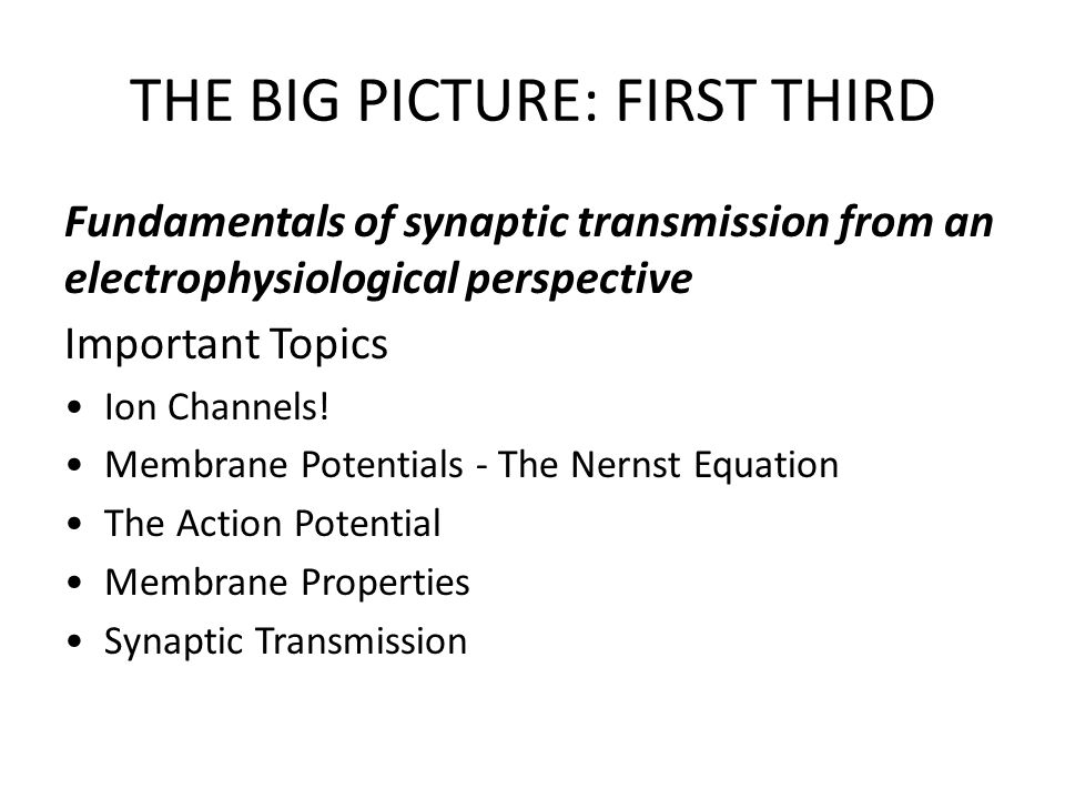 THE BIG PICTURE: FIRST THIRD Fundamentals of synaptic transmission from an electrophysiological perspective Important Topics Ion Channels! Membrane Po