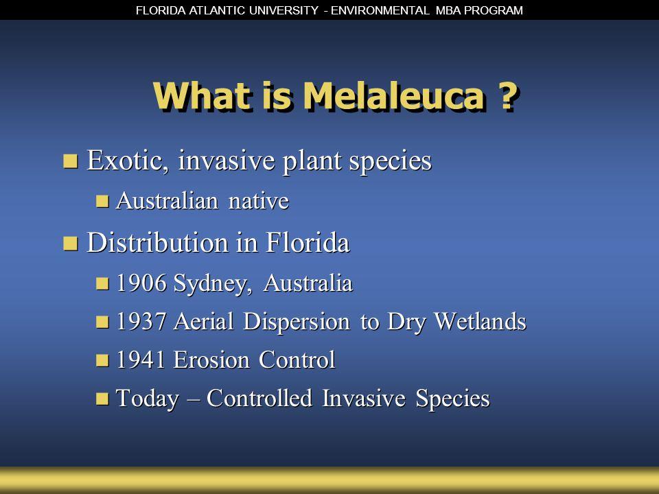 FLORIDA ATLANTIC UNIVERSITY - ENVIRONMENTAL MBA PROGRAM What is Melaleuca .