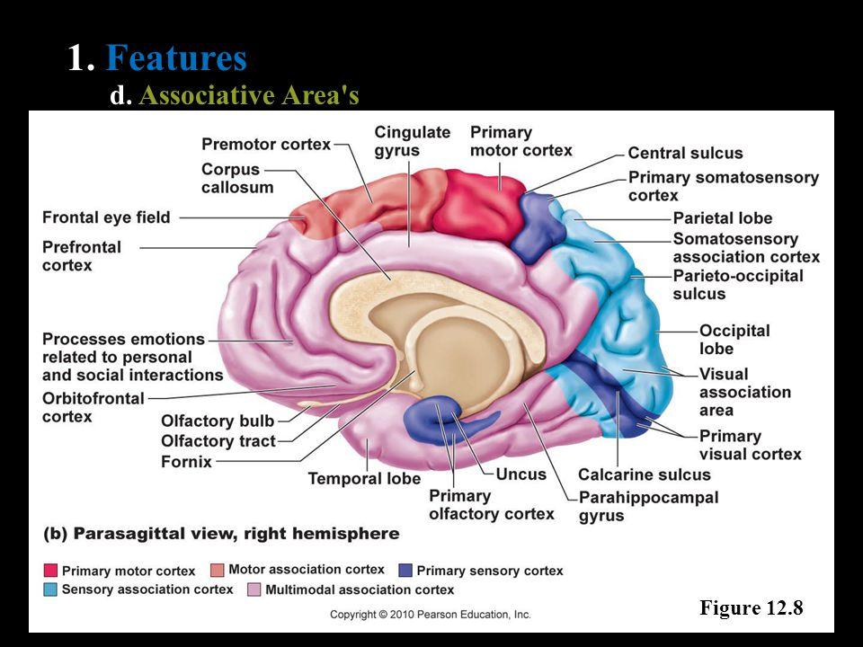 1. Features d. Associative Area's Figure 12.8