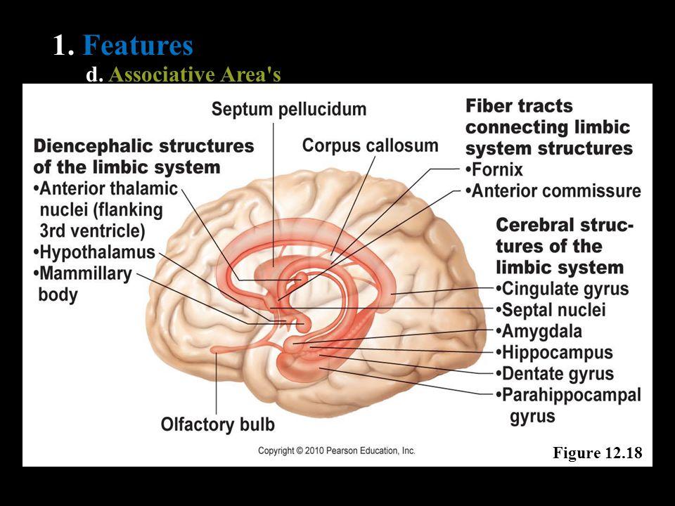 1. Features d. Associative Area's Figure 12.18