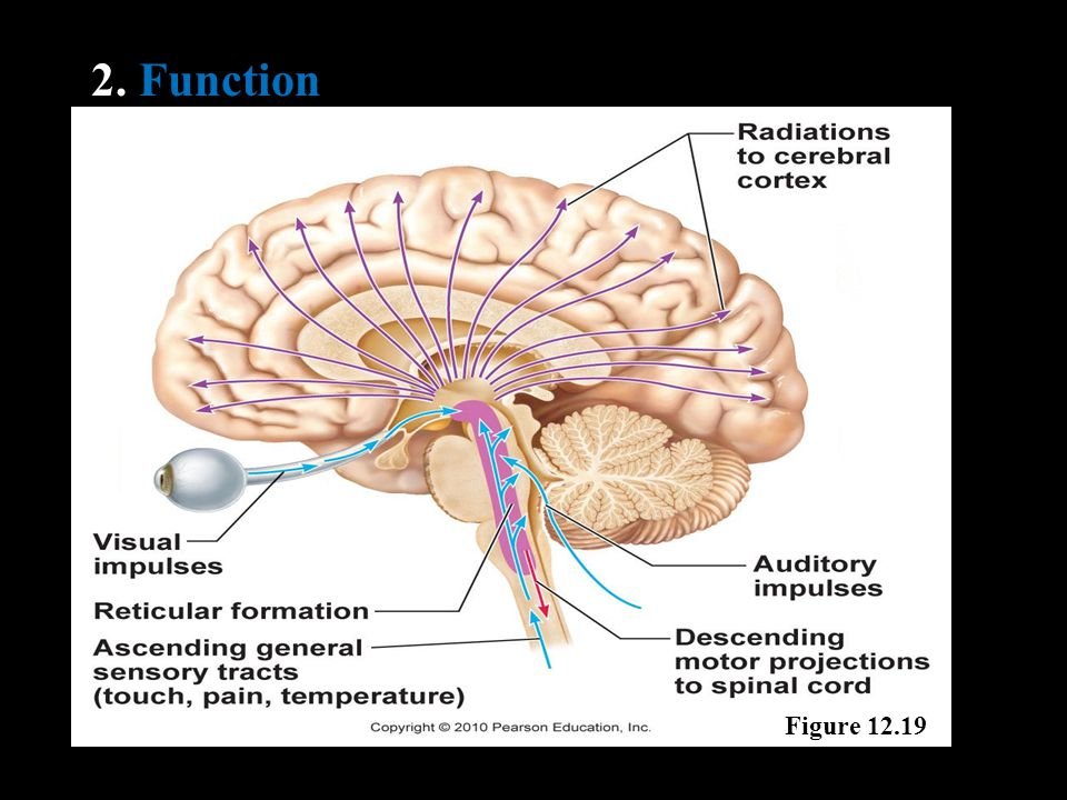 2. Function Figure 12.19