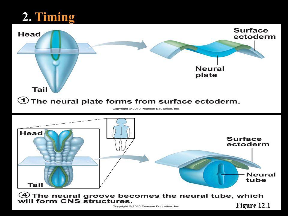 2. Timing Figure 12.1