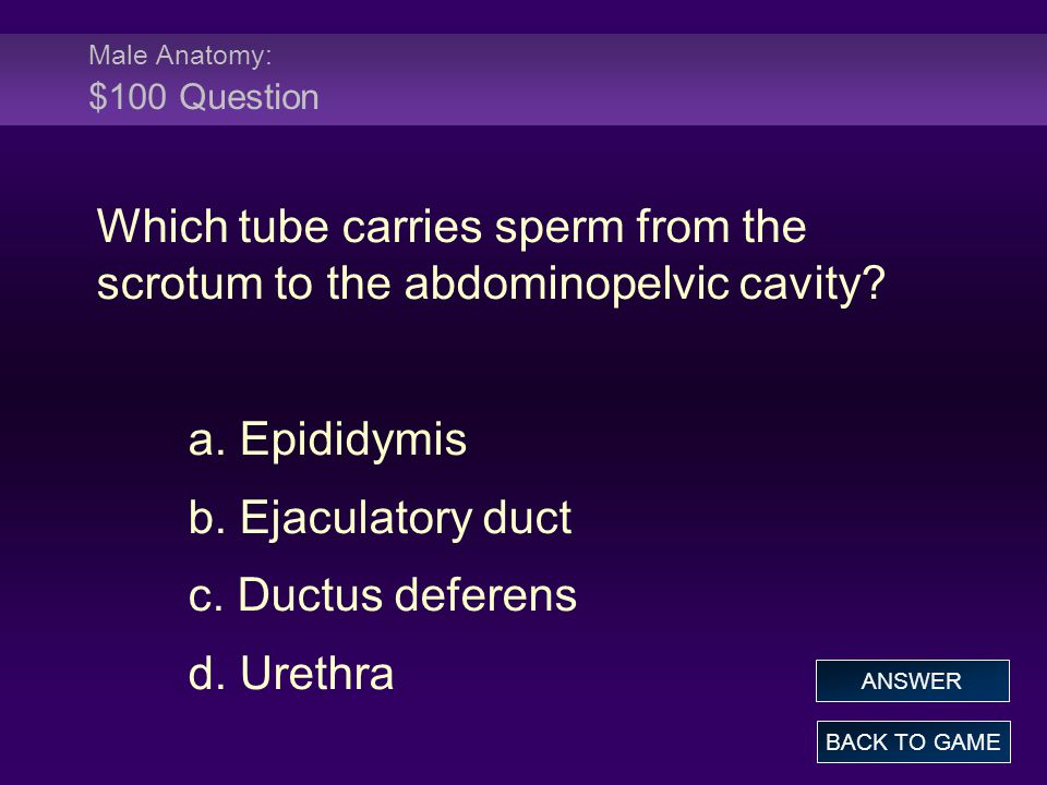 Male Physiology: $100 Answer All of the following are secondary sex characteristics of the male except: a.