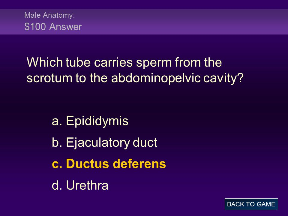 Male Physiology: $200 Question Where in the body are sperm stored.