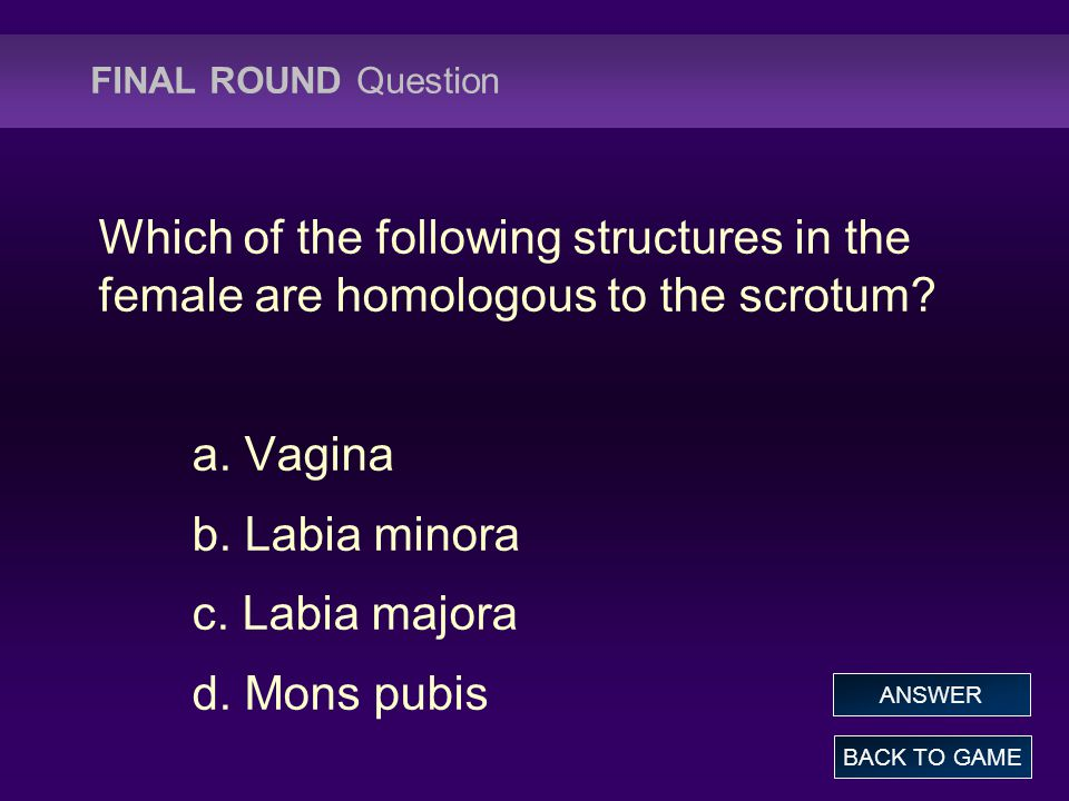 FINAL ROUND Question Which of the following structures in the female are homologous to the scrotum? a. Vagina b. Labia minora c. Labia majora d. Mons