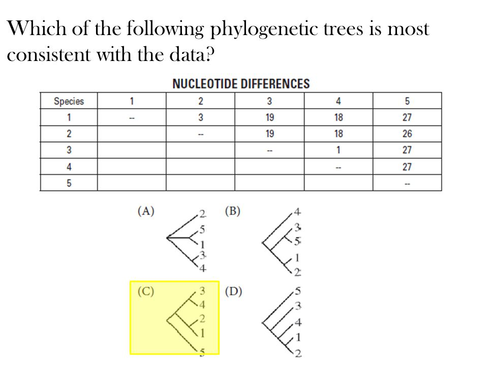 Which of the following phylogenetic trees is most consistent with the data?