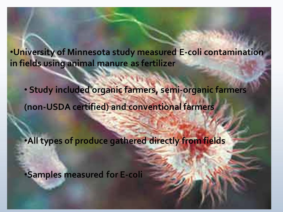 University of Minnesota study measured E-coli contamination in fields using animal manure as fertilizer Study included organic farmers, semi-organic farmers (non-USDA certified) and conventional farmers All types of produce gathered directly from fields Samples measured for E-coli