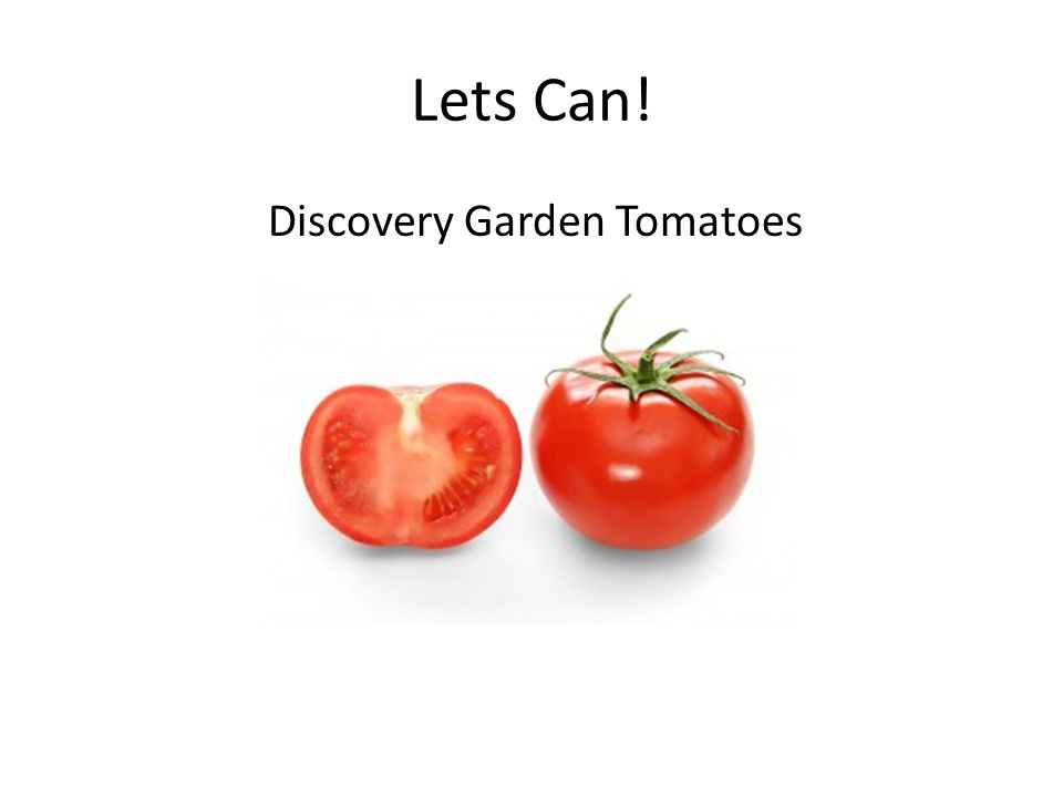 Lets Can! Discovery Garden Tomatoes