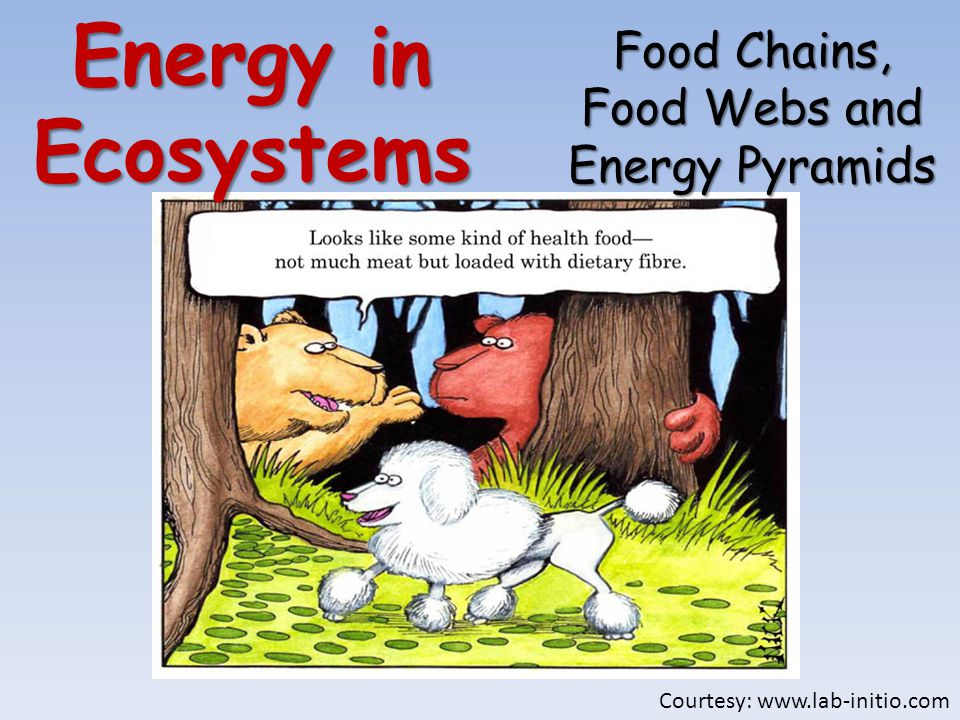 Energy in Ecosystems Food Chains, Food Webs and Energy Pyramids Courtesy: www.lab-initio.com