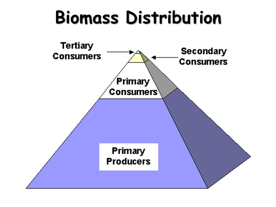Biomass Distribution