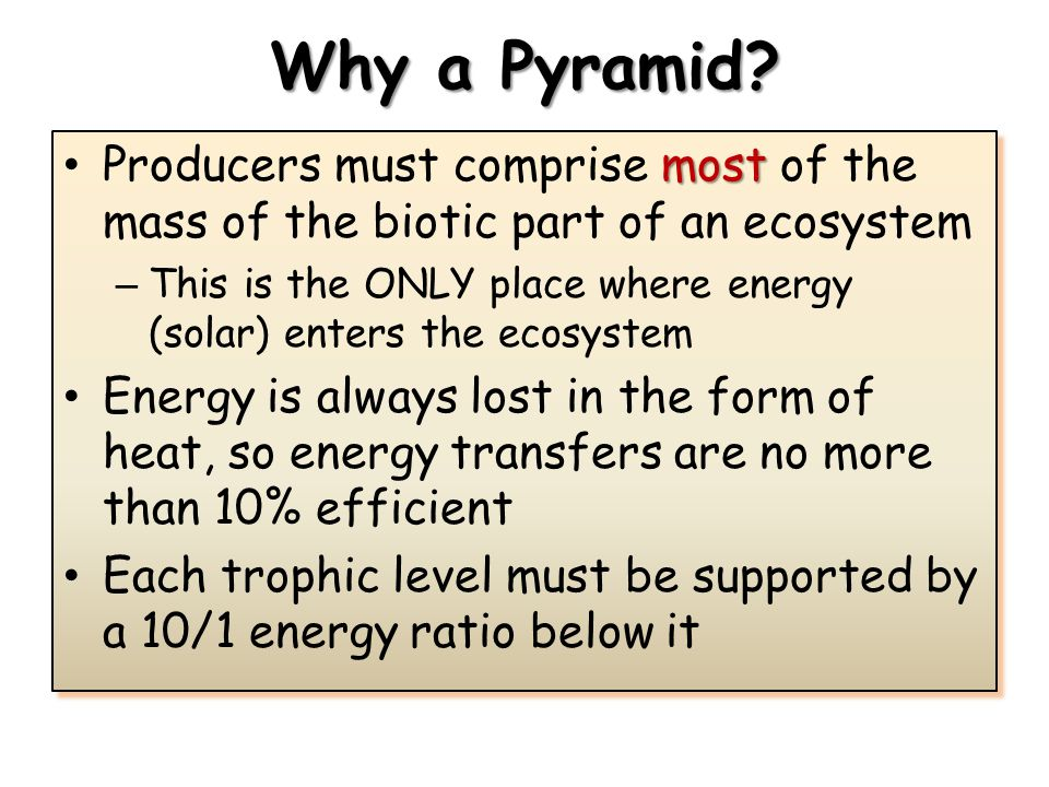 Why a Pyramid? most Producers must comprise most of the mass of the biotic part of an ecosystem – This is the ONLY place where energy (solar) enters t