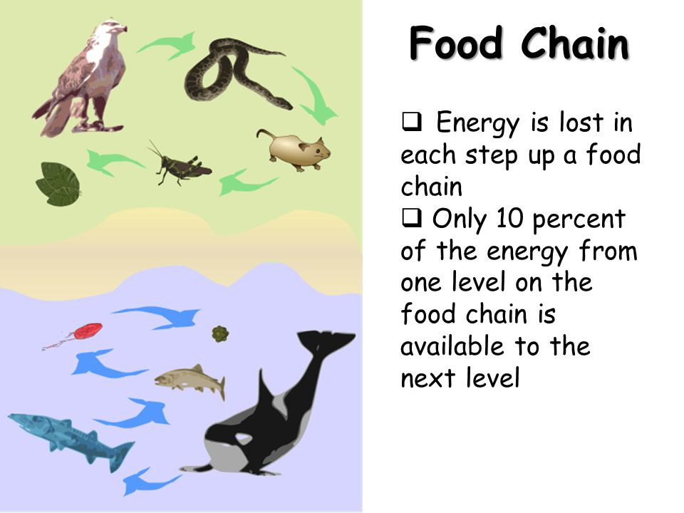 Food Chain  Energy is lost in each step up a food chain  Only 10 percent of the energy from one level on the food chain is available to the next lev