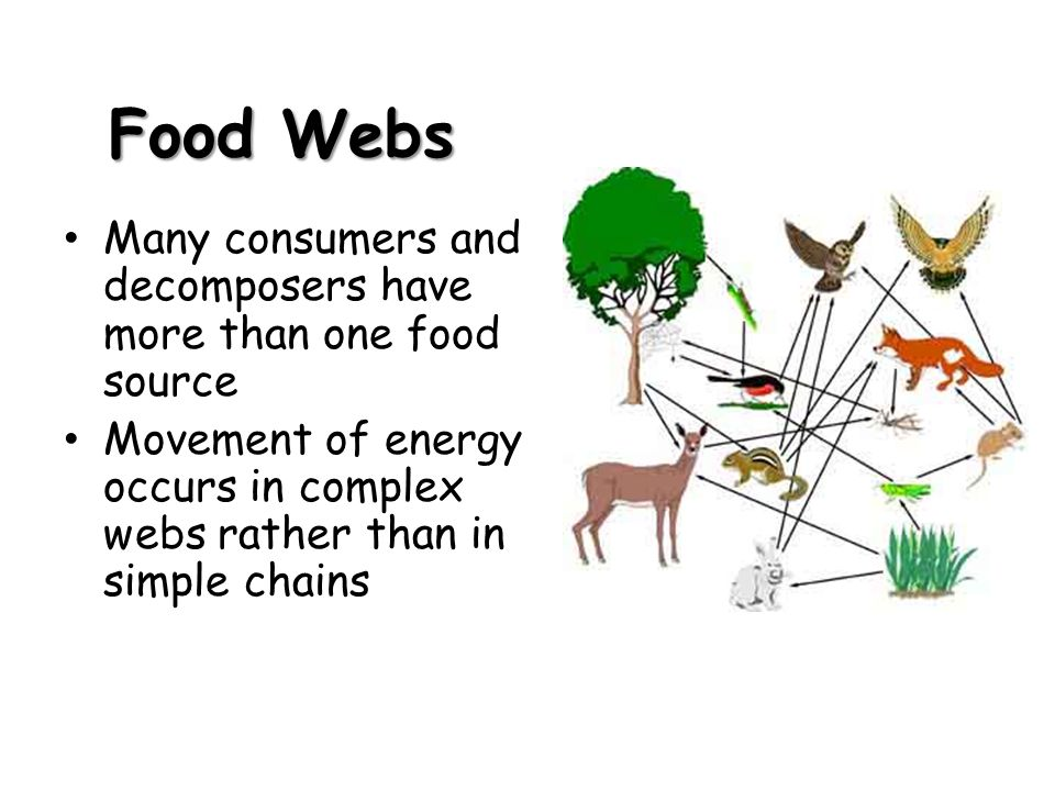 Food Webs Many consumers and decomposers have more than one food source Movement of energy occurs in complex webs rather than in simple chains