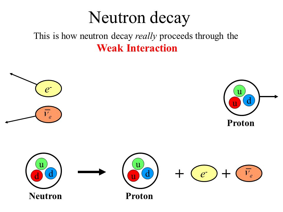 Neutron Decay (cont) u u d Proton d u d Neutron + W-W- npe - ++ du ++ But in fact, what's really going on is this: e-e- + W-W-