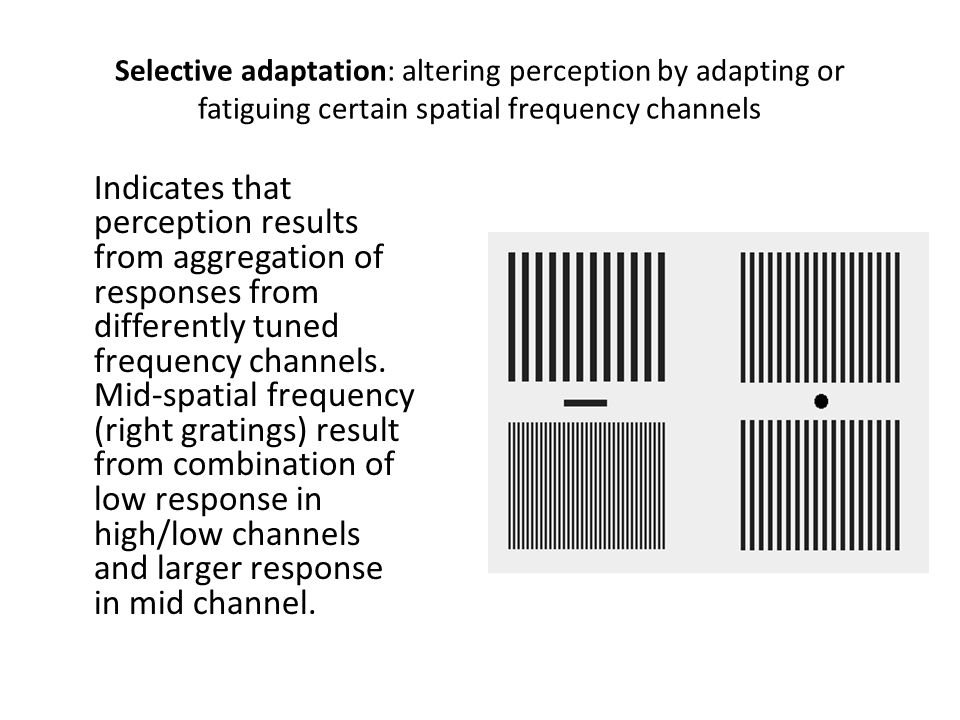 Selective adaptation: altering perception by adapting or fatiguing certain spatial frequency channels Indicates that perception results from aggregati