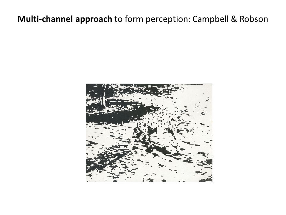 Multi-channel approach to form perception: Campbell & Robson