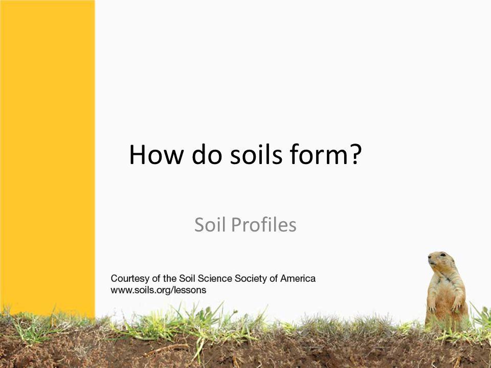 How do you start describing the soil.What do you see.