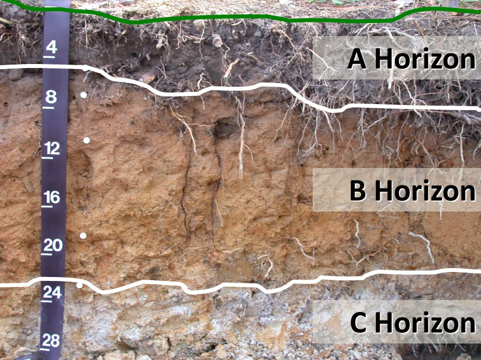 B Horizons Referred to as subsoil.The zone of accumulation (or illuviation) within the soil.