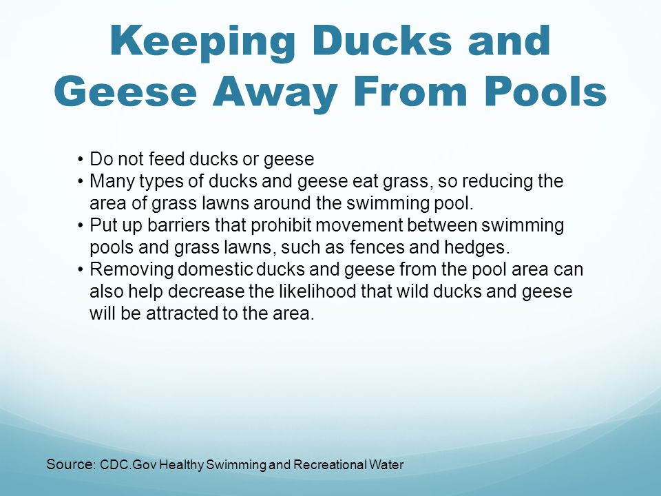 Keeping Ducks and Geese Away From Pools Do not feed ducks or geese Many types of ducks and geese eat grass, so reducing the area of grass lawns around the swimming pool.