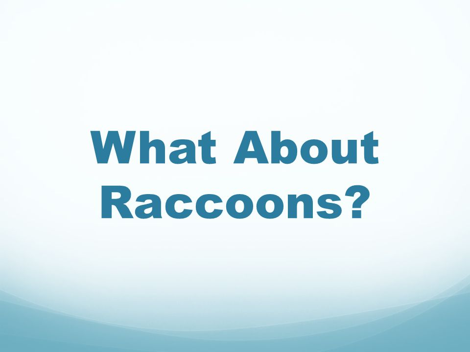 What About Raccoons?