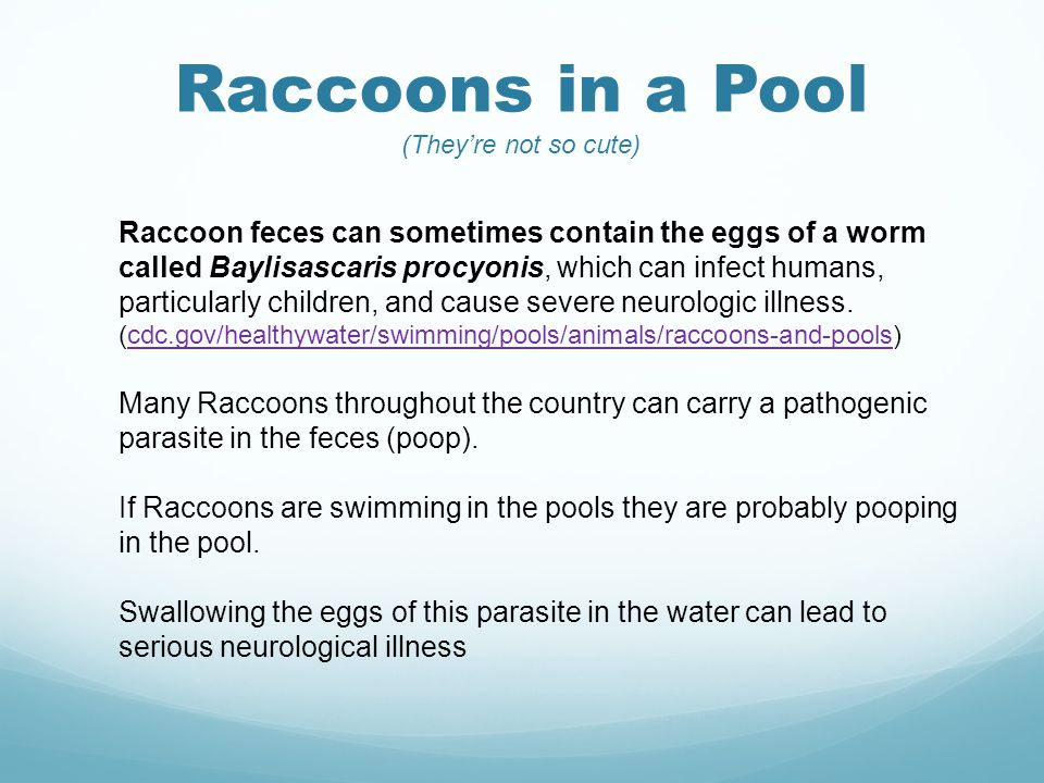 Raccoons in a Pool (They're not so cute) Raccoon feces can sometimes contain the eggs of a worm called Baylisascaris procyonis, which can infect humans, particularly children, and cause severe neurologic illness.
