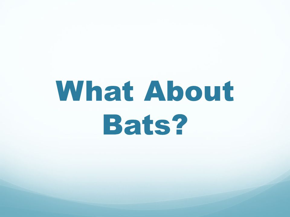 What About Bats