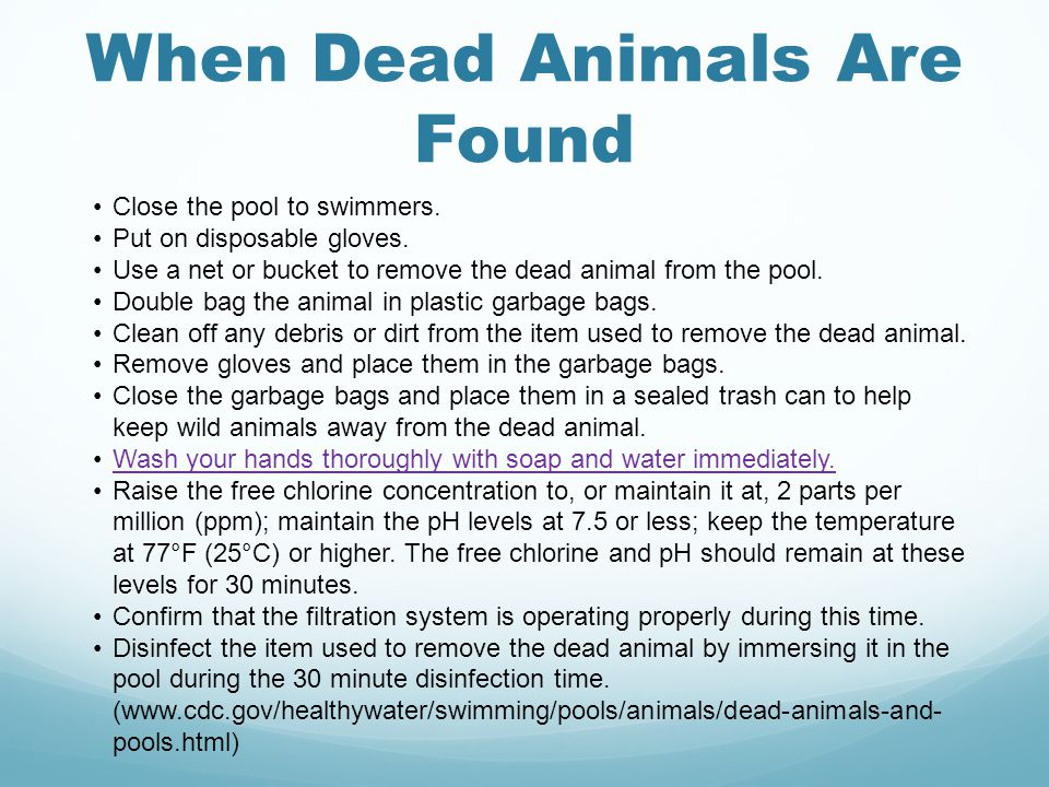 When Dead Animals Are Found Close the pool to swimmers.