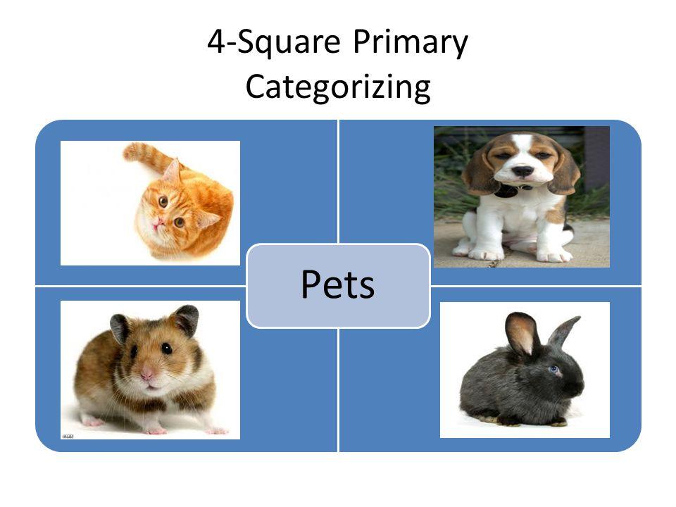 4-Square Primary Categorizing Pets