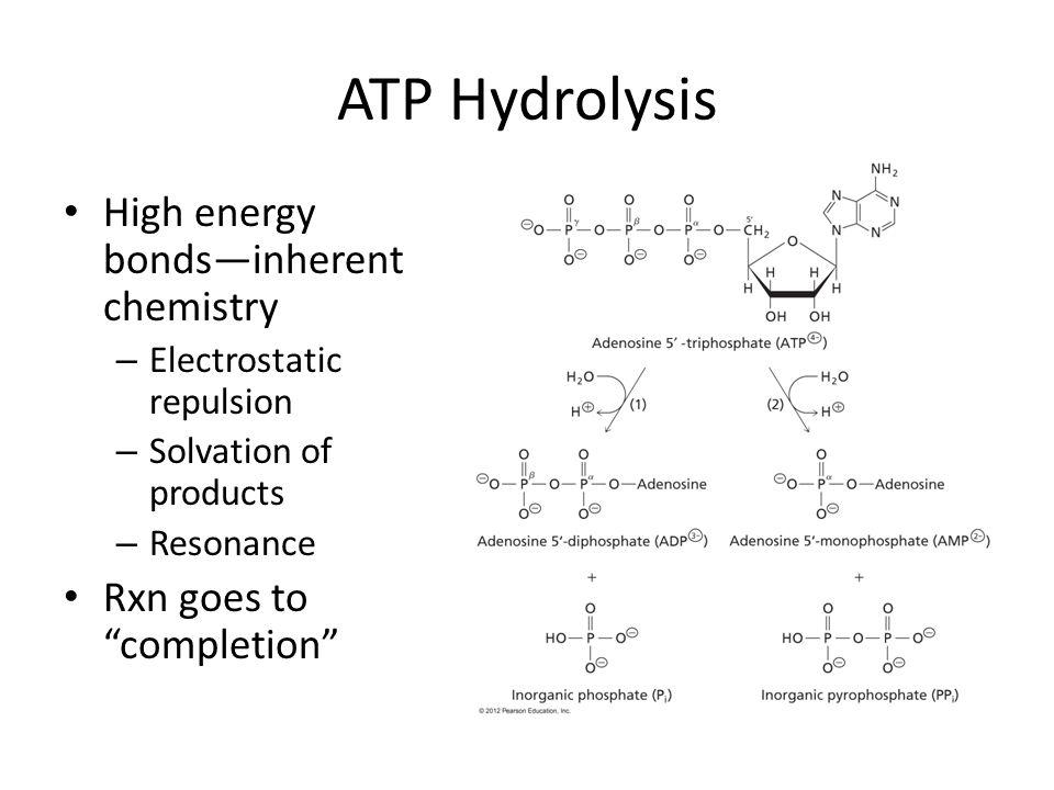 Phosphoryl Transfer in Energetic Intermediates Phosphoryl group transfer potential