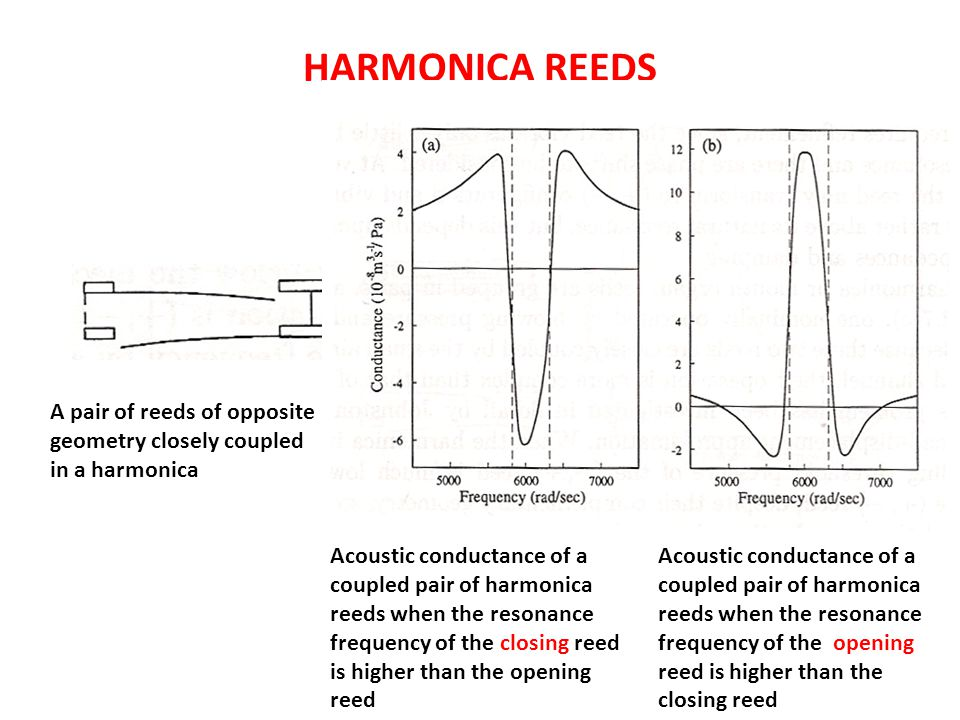 HARMONICA REEDS A pair of reeds of opposite geometry closely coupled in a harmonica Acoustic conductance of a coupled pair of harmonica reeds when the resonance frequency of the closing reed is higher than the opening reed Acoustic conductance of a coupled pair of harmonica reeds when the resonance frequency of the opening reed is higher than the closing reed