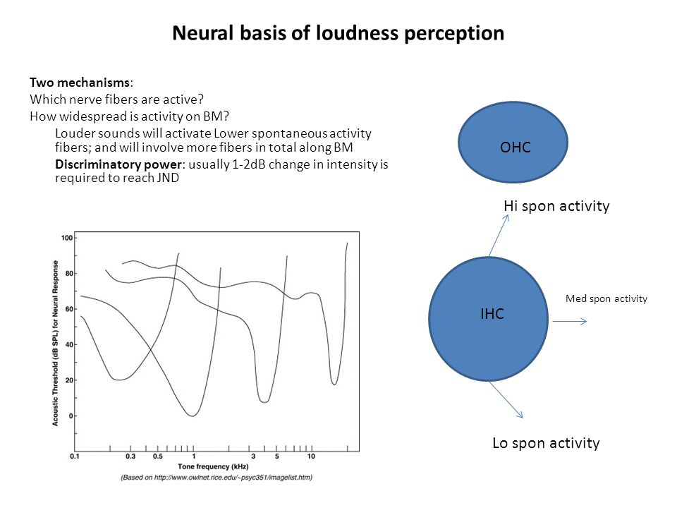 Pitch perception Fundamental frequency: usually lowest frequency produced by vibrating body that accounts for pitch perception.