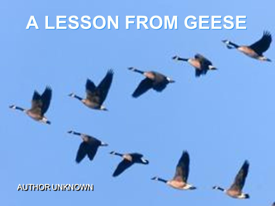 A LESSON FROM GEESE AUTHOR UNKNOWN