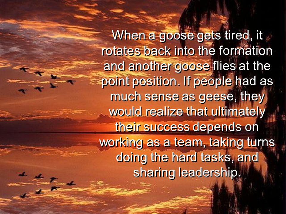 When a goose gets tired, it rotates back into the formation and another goose flies at the point position. If people had as much sense as geese, they