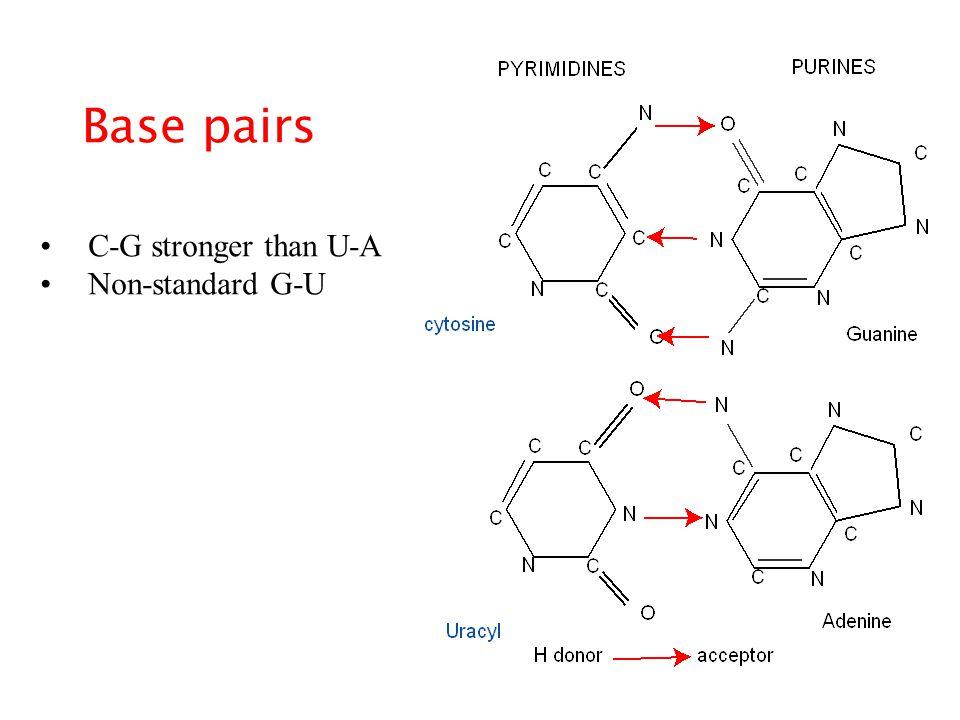 Base pairs C-G stronger than U-A Non-standard G-U