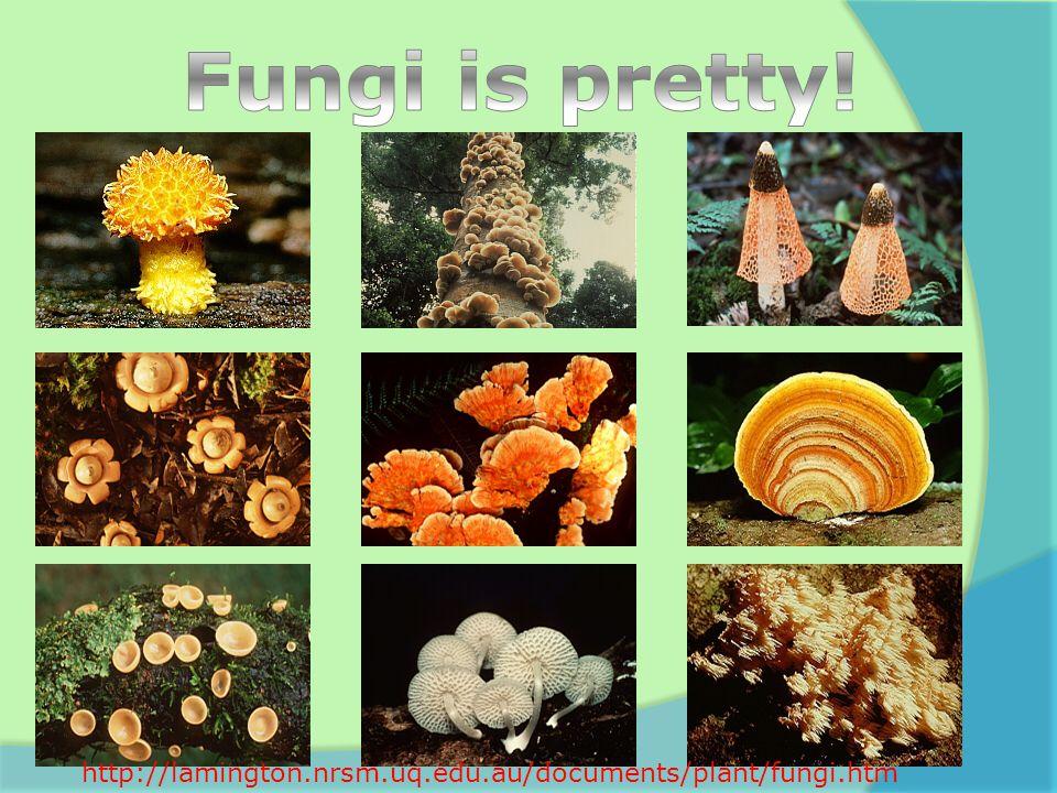 http://lamington.nrsm.uq.edu.au/documents/plant/fungi.htm