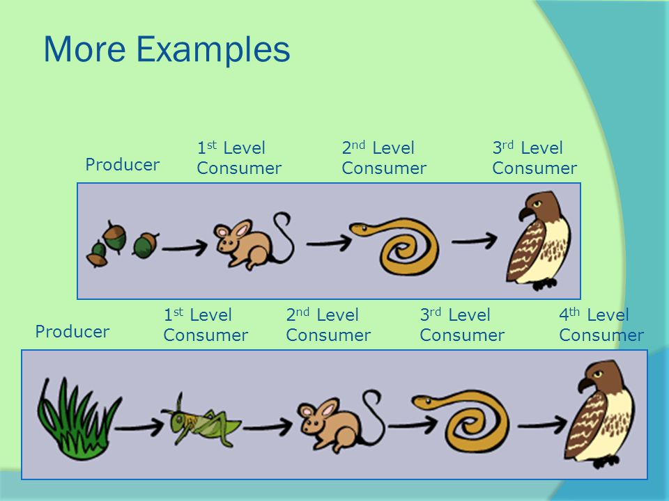 More Examples Producer 1 st Level Consumer 2 nd Level Consumer 3 rd Level Consumer 4 th Level Consumer