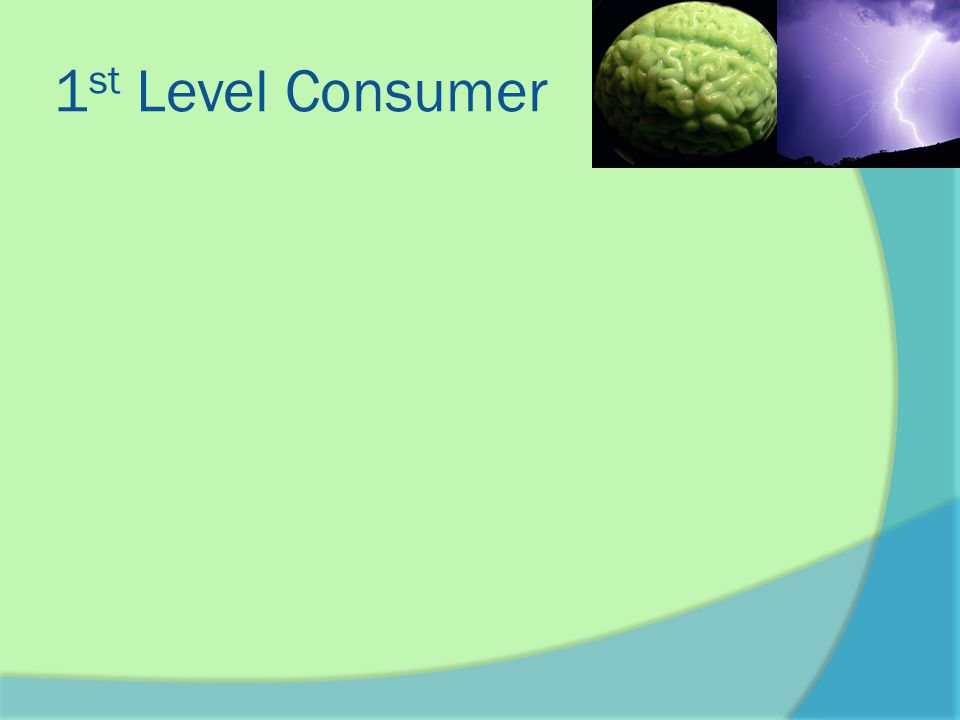 2 nd Level Consumer  A 2 nd level consumer eats the first level consumer These consumers could be considered omnivores or carnivores ○ An omnivore is an animal that eats both plants and animals ○ A carnivore is an animal that only eats meat