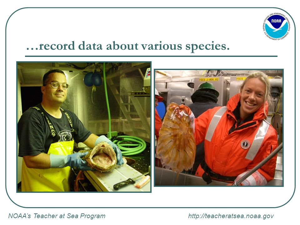 NOAA's Teacher at Sea Program http://teacheratsea.noaa.gov …record data about various species.