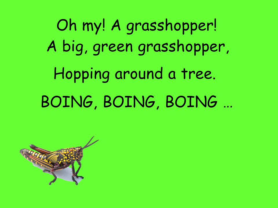 Oh my! A grasshopper! A big, green grasshopper, Hopping around a tree. BOING, BOING …