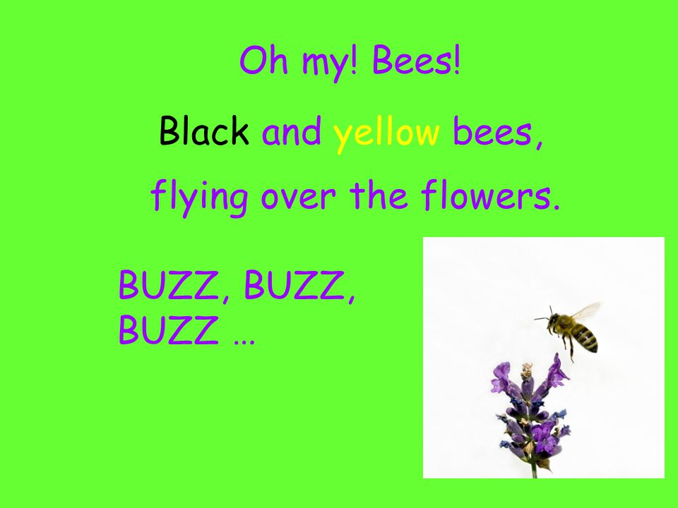 Oh my! Bees! Black and yellow bees, flying over the flowers. BUZZ, BUZZ …