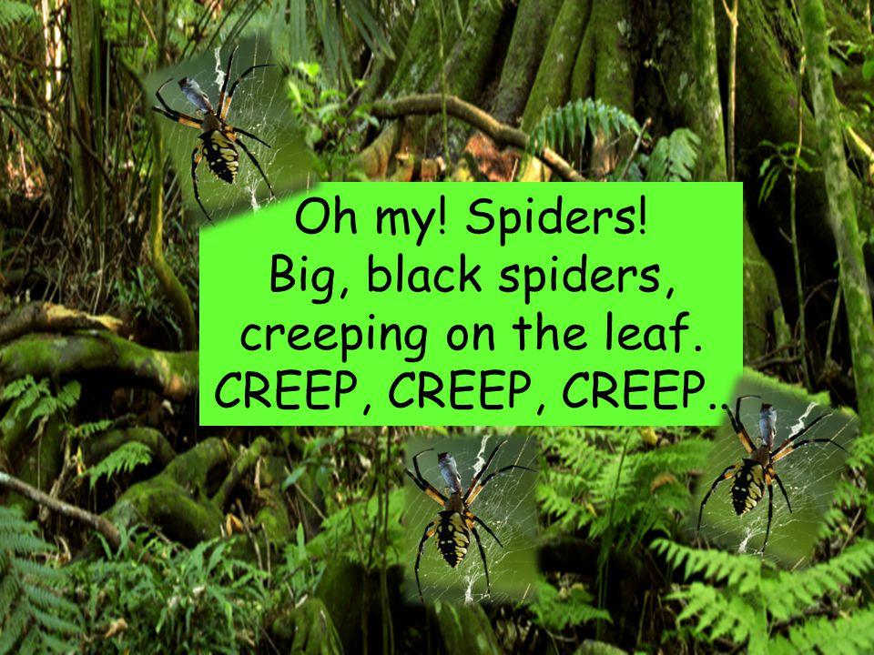 Oh my! Spiders! Big, black spiders, creeping on the leaf. CREEP, CREEP, CREEP..