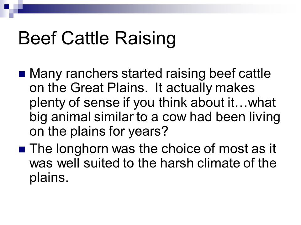 Beef Cattle Raising Many ranchers started raising beef cattle on the Great Plains.