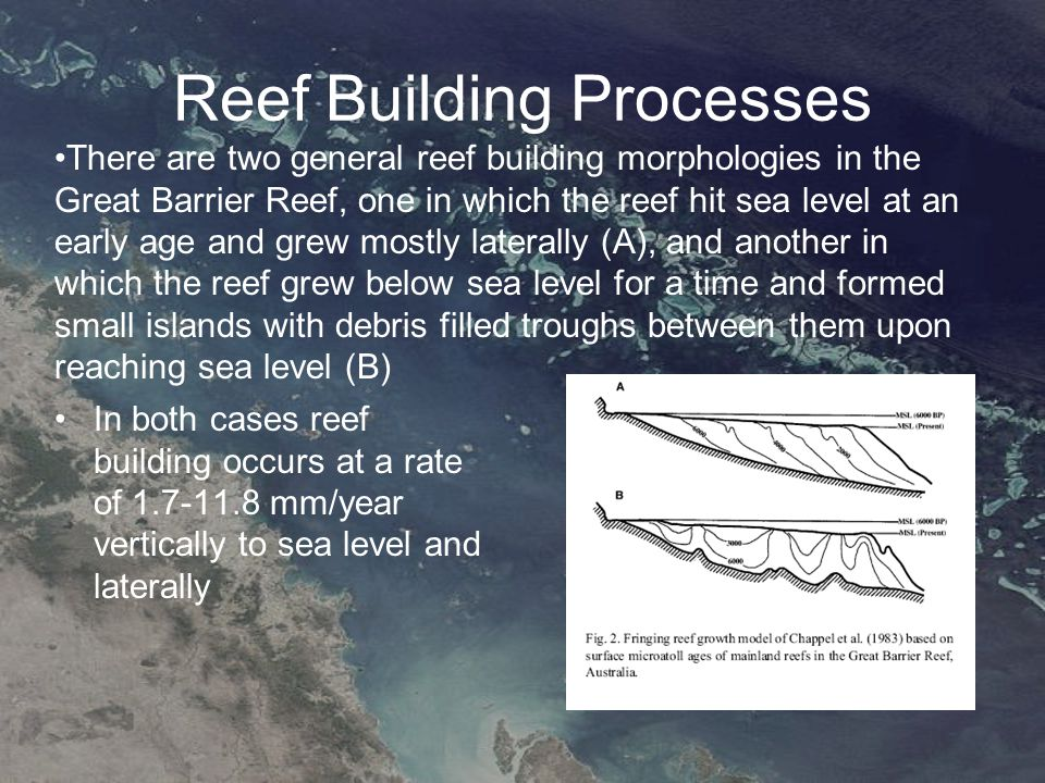 Reef Building Processes In both cases reef building occurs at a rate of 1.7-11.8 mm/year vertically to sea level and laterally There are two general reef building morphologies in the Great Barrier Reef, one in which the reef hit sea level at an early age and grew mostly laterally (A), and another in which the reef grew below sea level for a time and formed small islands with debris filled troughs between them upon reaching sea level (B)