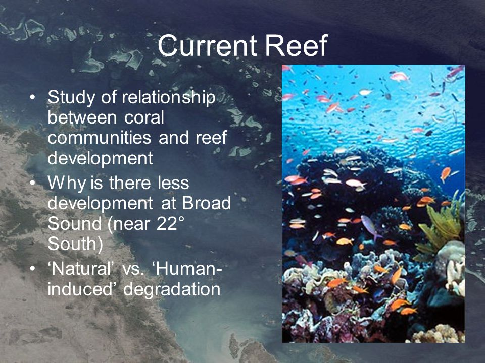Current Reef Study of relationship between coral communities and reef development Why is there less development at Broad Sound (near 22° South) 'Natural' vs.