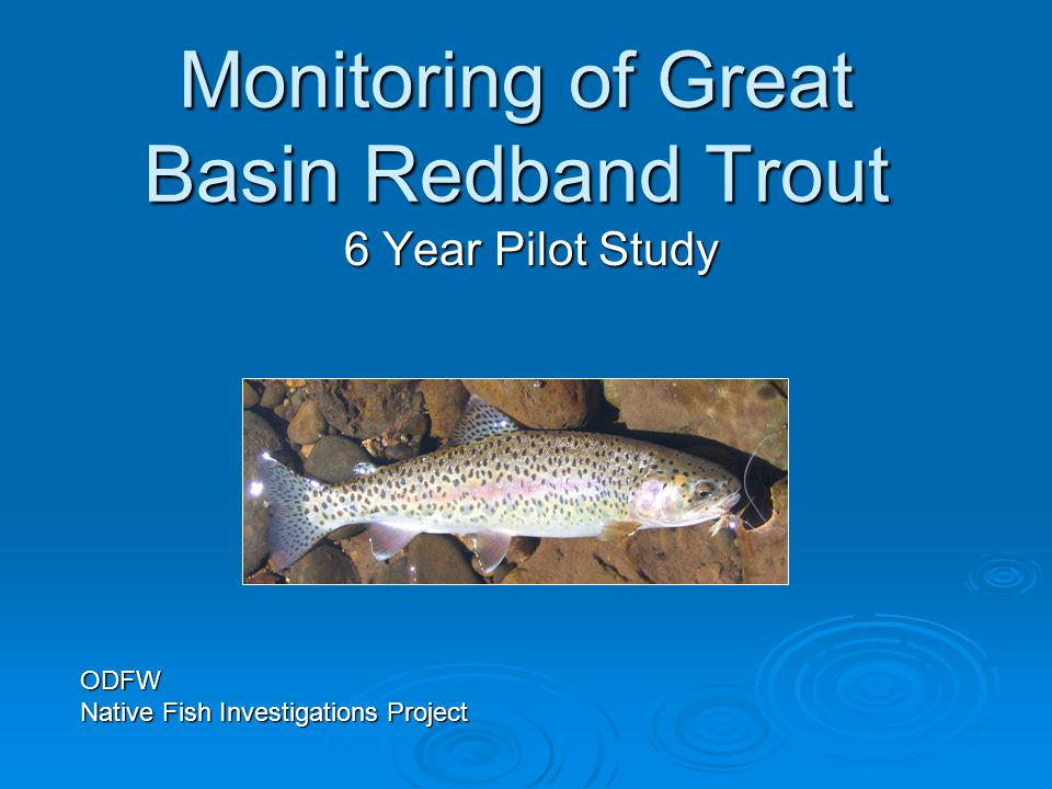 Monitoring of Great Basin Redband Trout 6 Year Pilot Study ODFW Native Fish Investigations Project