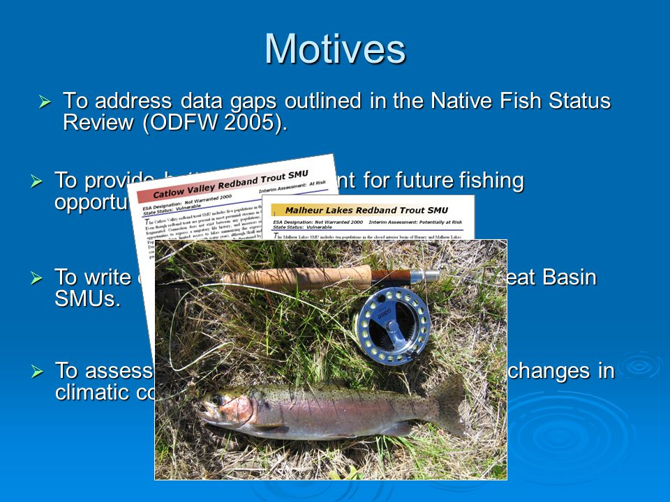 Motives  To address data gaps outlined in the Native Fish Status Review (ODFW 2005).