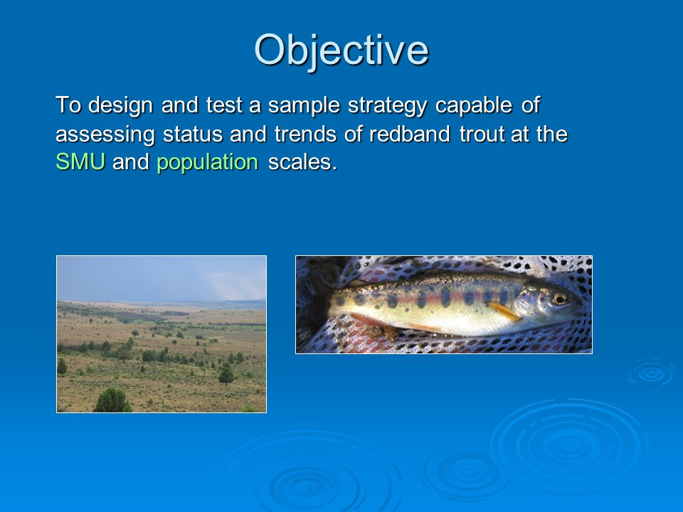 Objective To design and test a sample strategy capable of assessing status and trends of redband trout at the SMU and population scales.