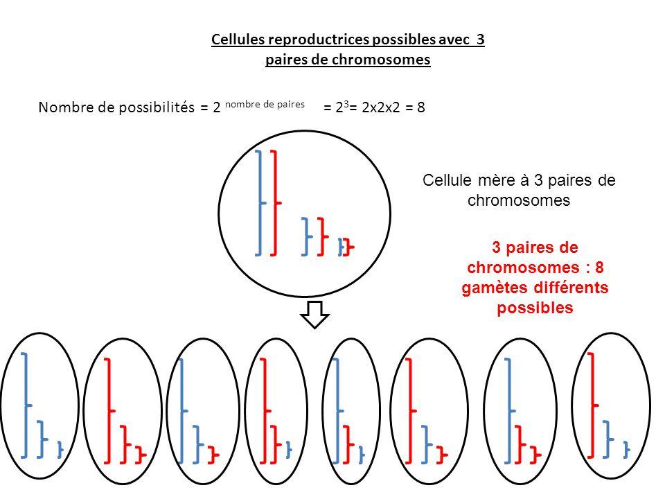 Cellules reproductrices possibles avec 3 paires de chromosomes Nombre de possibilités = 2 nombre de paires = 2 3 = 2x2x2 = 8 Cellule mère à 3 paires d