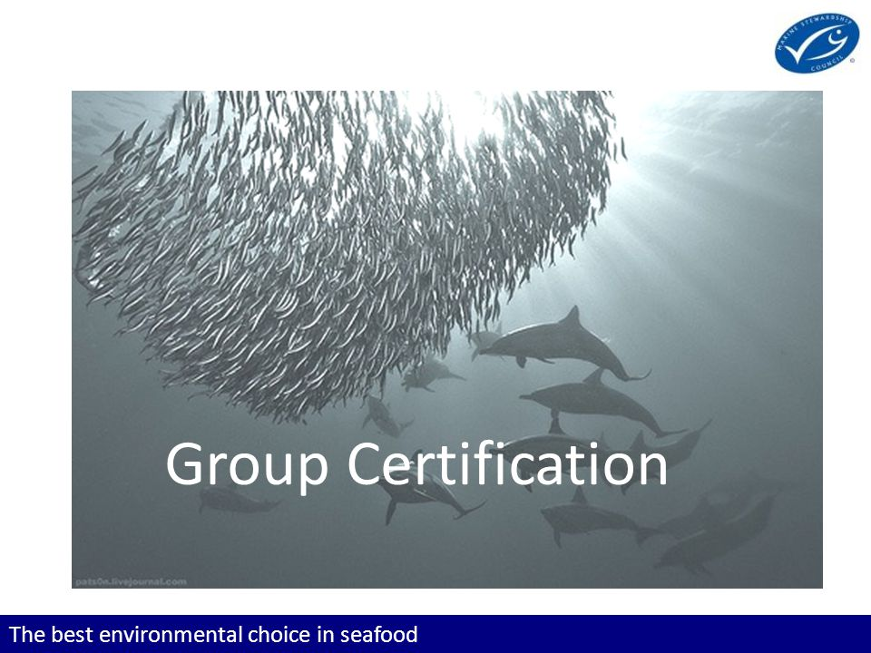 The best environmental choice in seafood What is a group.